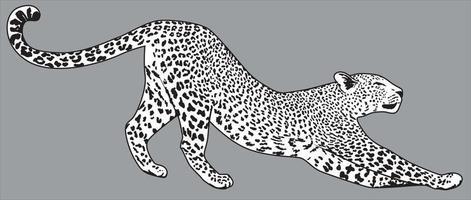 Leopard vector detailed illustration. Jaguar drawing