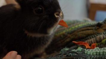 conejo o conejito sentado y jugando en el piso en casa video