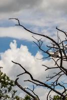 Trees and branches reach for the sky photo