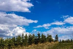 Fluffy clouds and pine trees photo
