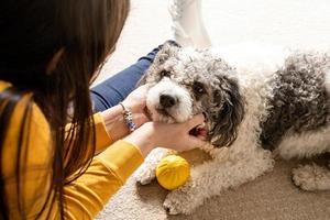 Bella mujer con juguetón perro joven divirtiéndose en casa foto