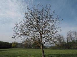 Nogal en un prado sobre el cielo azul foto