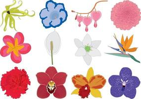 Different multicolored bright flowers collection vector illustration