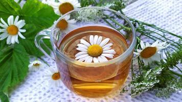 bebida curativa hecha de manzanilla medicinal foto