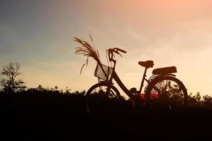 Silhouette of bicycle and grass flower with blue sky photo