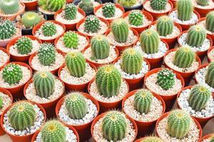 Beautiful green cactus plant in flowerpot photo