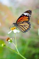 Closeup butterfly on flower in garden photo