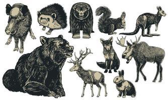 animales de europa dibujados a mano set vintage grabado vector