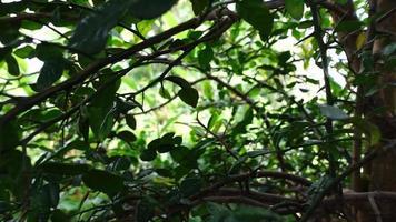 Slow-motion bergamot plants background video