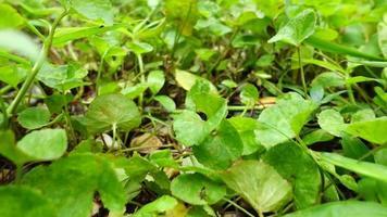 fhd 250 fps plantas verdes en cámara lenta en el suelo video