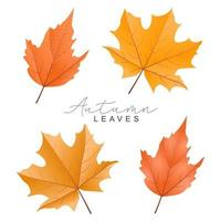 Hand drawn autumn leaves collection vector