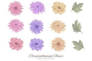 colección de coloridas flores y hojas de crisantemo vector