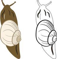 Snail Insect 2d Illustration Clipart. Shelled gastropod 2d Vector. vector