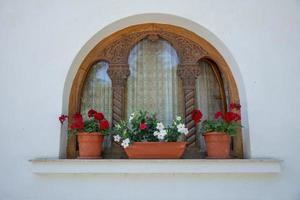 Red Geranium flowers photo
