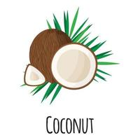 Coconut superfood fruit for template farmer market, label, packing. vector