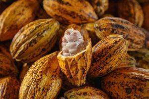 mazorcas de cacao crudas y granos de cacao foto