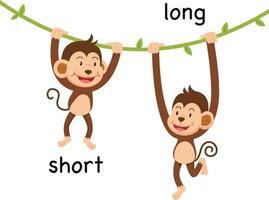 Ilustración opuesta corta y larga. vector
