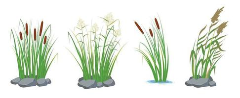 Set of cane and reeds in the green grass. Swamp and river plants. vector
