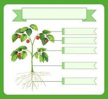 escribir partes de una hoja de trabajo de plantas para niños vector