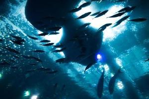 Aquarium sea creatures photo