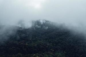 trees and mountains on rainy day photo
