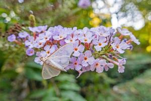 mariposa en una flor en la naturaleza foto