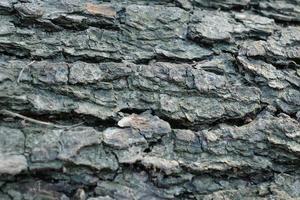 gray pine tree trunk texture, grey textured bark close-up photo