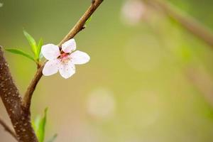 The white flowers in the spring tone. Beautiful flowers in nature photo