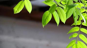 Cerrar hermosa vista de la naturaleza hojas verdes en vegetación borrosa foto