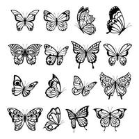 Beautiful nature flying insect exotic butterflies with funny wings vector