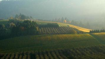 video aéreo del valle de willamette, viñedos de oregon en color otoñal