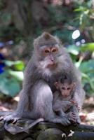 Ubud Monkey Forest in Bali photo