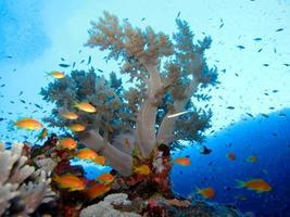 Amazing underwater world of the Red Sea photo