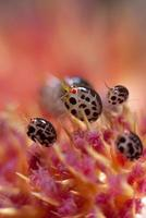 Tiny underwater ladybug photo
