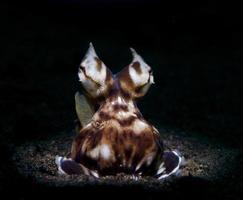 imitar pulpo en el fondo del mar foto