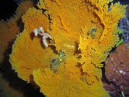 corales duros del estrecho de lembeh. foto
