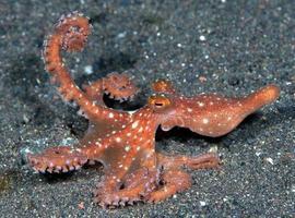 pulpo de la noche estrellada en el fondo del mar en la noche. foto
