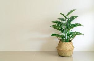 Monstera in wicker basket pot with wall photo