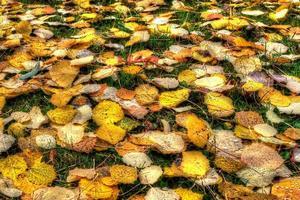 hojas de otoño en los alpes suizos foto