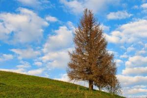 Un abeto otoñal en un prado con cielo azul y nubes foto