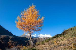 otoño de alerce en las altas montañas foto