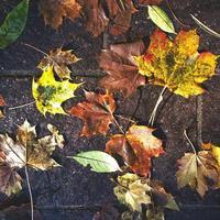 hojas de otoño caídas al suelo durante la lluvia foto