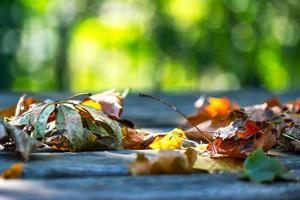 Close-up of autumn leaves on the ground photo