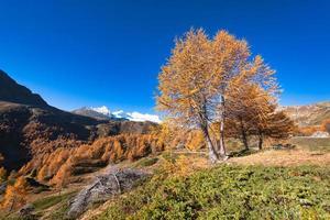 Alerce de otoño colorido en las altas montañas foto