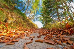 Mountain trail with beautiful autumn colors among the leaves photo