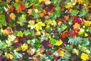 multitud de colores de follaje otoñal en el suelo foto