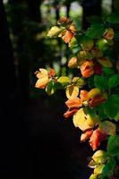 el sol ilumina las coloridas hojas de otoño foto