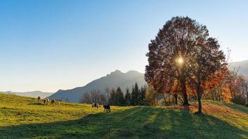 Scene of mountain pastures in autumn photo
