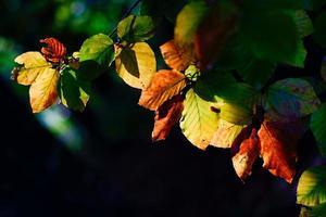la luz del sol se filtra a través de las hojas de otoño foto
