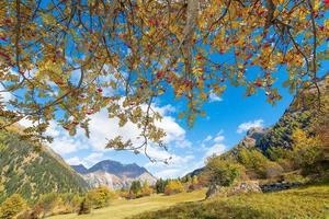 Planta de sorbus aucuparia en los Alpes foto